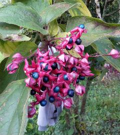 Jardinier paysagiste fil vert de gen ve lausanne for Entretien jardin geneve